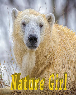 Photograph - Nature Girl Polar Bear by LeeAnn McLaneGoetz McLaneGoetzStudioLLCcom
