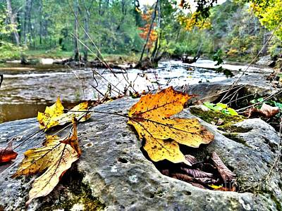 Indiana Rivers Digital Art - Nature Hike Along The Muscatatuck River by Scott D Van Osdol