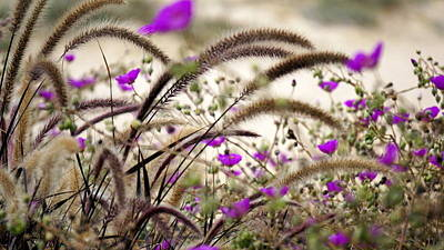 Photograph - Nature In Abundance  by Laurie Pike