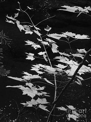 Photograph - Nature In Black And White by Marcia Lee Jones