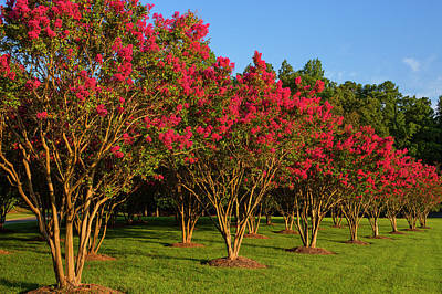 Wall Art - Photograph - Nature In Full Bloom by Cliff Middlebrook