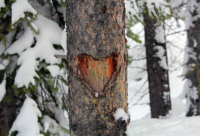 Photograph - Nature In Love by Silke Brubaker