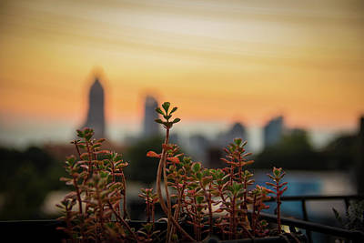 Photograph - Nature In The City by Kenny Thomas