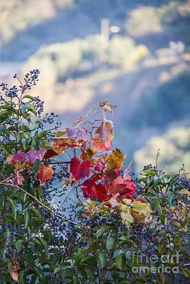 Photograph - Nature In Tivoli,rome,italy by Svetlana Batalina