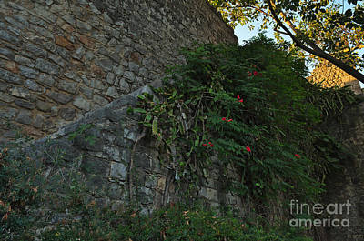 Archeology Photograph - Nature Invades The Castle by Angelo DeVal