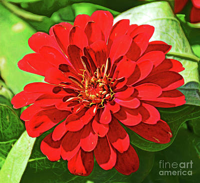 Photograph - Nature Is Beautiful 1718-1 by Ray Shrewsberry