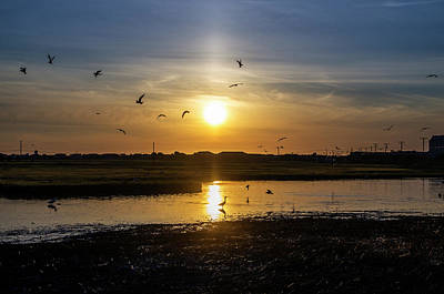 Nature Is Busy At Sunrise Art Print by Bill Cannon