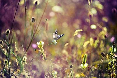 Nature Original
