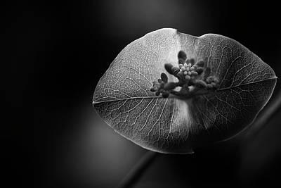 Photograph - Nature Kiss by Matthew Blum