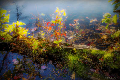 Digitally Manipulated Mixed Media - Nature Log by Brian Wallace