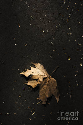 Lifeless Photograph - Nature Maple Leaf Fine Art Photo. Fall Of Autumn by Jorgo Photography - Wall Art Gallery