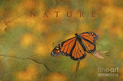 Photograph - Nature Monarch Butterfly by Charles Owens