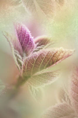 Photograph - Nature Of Fractals by Elvira Pinkhas