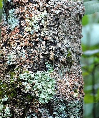 Photograph - Nature Painted Tree Bark by David Lane