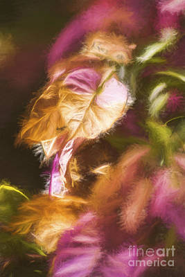 Graphic Images Photograph - Nature Pastel Artwork by Jorgo Photography - Wall Art Gallery