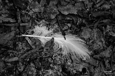 Photograph - Nature Photography Fallen Bw by Lesa Fine