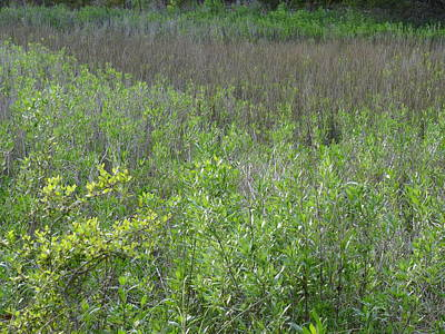 Photograph - Nature Preserve Ground Texture Pack I by Angela Hansen