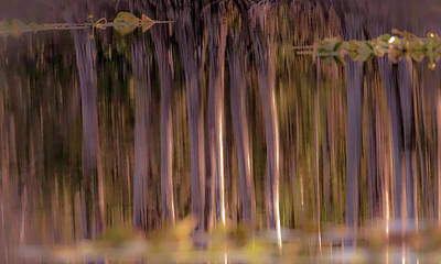 Photograph - Nature Reflections by Francisco Gomez