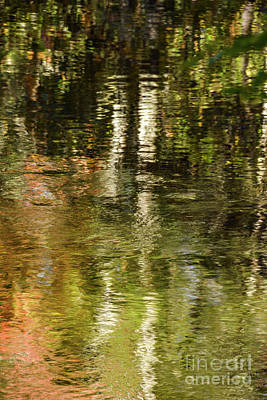 Photograph - Nature Reflects by John Greco