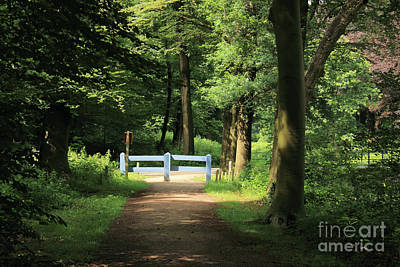 Nature Reserve Netherlands  Art Print
