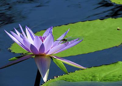 Photograph - Nature Shares It's Beauty by Rosalie Scanlon