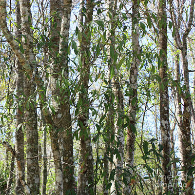 Photograph - Nature Square - Florida Trees by Carol Groenen