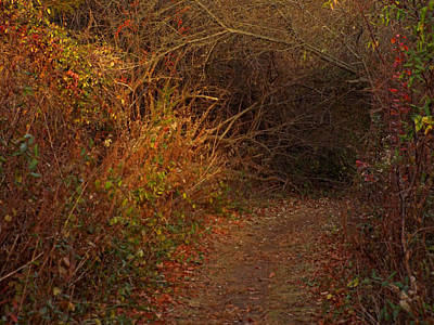 Digital Art - Nature Trail 2 by Steve Breslow