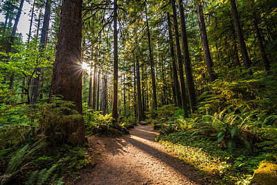 Olympic National Park Photograph - Nature Trail by Kristopher Schoenleber