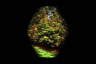 Photograph - Nature Vase 1 by Angie Tirado