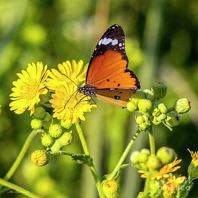 Photograph - Nature Warm Colors by Arik Baltinester