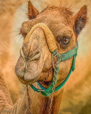 Photograph - Nature Wear Camel by LeeAnn McLaneGoetz McLaneGoetzStudioLLCcom