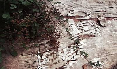 #nature #wood #naturephotography Original