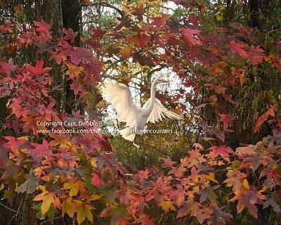 Photograph - Nature Wreath by Captain Debbie Ritter
