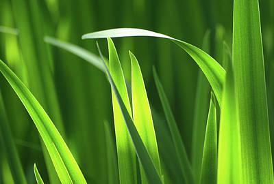 Nature - Grace Of Pond Sedge Blades 01 Original