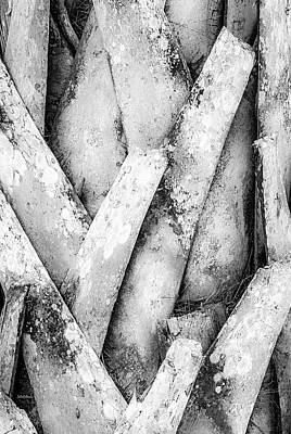Photograph - Natures Abstract Black And White by Julie Palencia