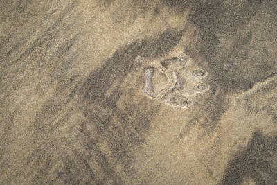 Photograph - Natures Amazing Abstracts - Solitary Paw Print Left Behind by Georgia Mizuleva