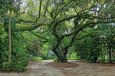 Photograph - Natures Artwork by HH Photography of Florida