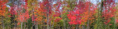 Photograph - Natures Autumn Palette by David Patterson