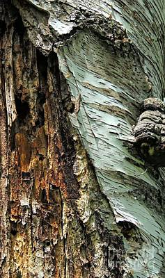 Photograph - Natures Bark by Marcia Lee Jones