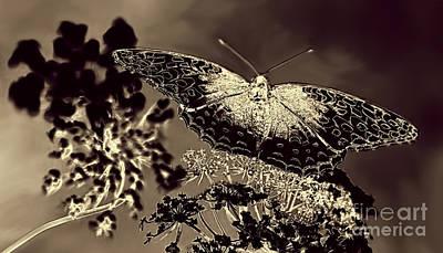 Arnie Goldstein Photograph - Natures Beauty by Arnie Goldstein