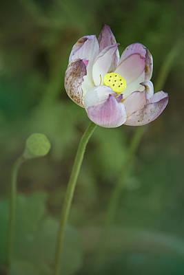 Photograph - Nature's Beauty by Elvira Pinkhas