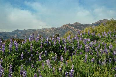 Photograph - Nature's Beauty In Porter Ranch by Lynn Bauer