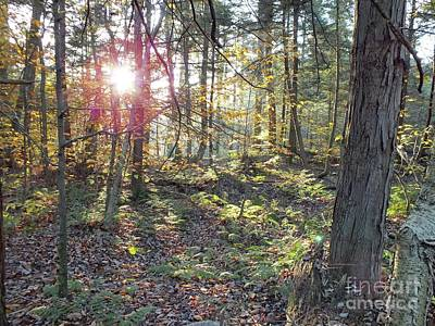 Book Quotes - Natures Beauty - Ricketts Glen by Cindy Treger