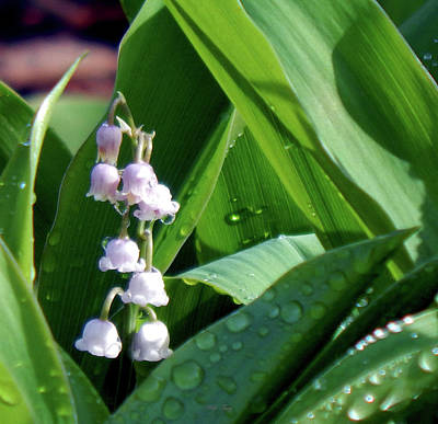 Photograph - Natures Bells by Wild Thing