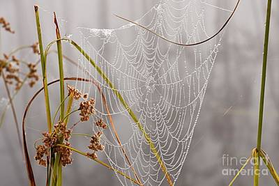 Photograph - Natures Bling by Larry Ricker