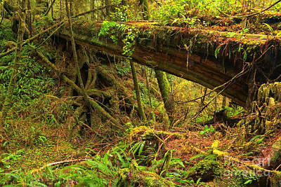 Photograph - Nature's Bridge by Adam Jewell