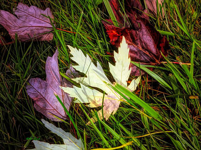 Maple Leaf Art Mixed Media - Natures Call by Debra Lynch
