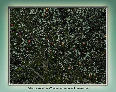 Fall Photograph - Nature's Christmas Lights by Gary Adkins