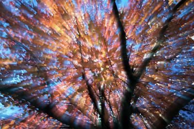 Photograph - Nature's Color Burst by Terry DeLuco