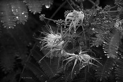 Photograph - Nature's Decor by Jeanette C Landstrom